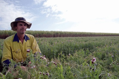Soil Health and Plant Nutrition