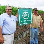 Milestone planting in a Mackay cane field